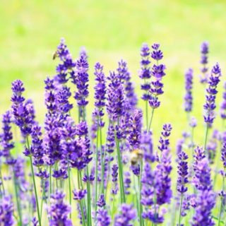 French gardens Lavender Jobs in France