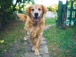a picture of a dog (chien)
