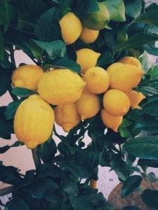 La Fête du Citron