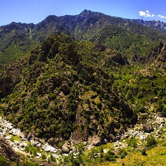 Live in Corsica