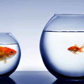 small-big-fish-babylangues