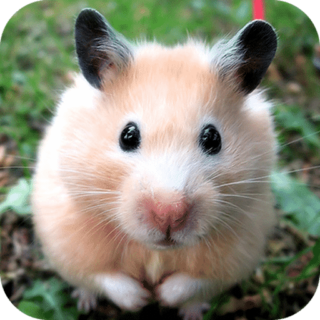 hamster-babylangues-French-humour