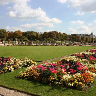 babylangues-plantes-luxembourg